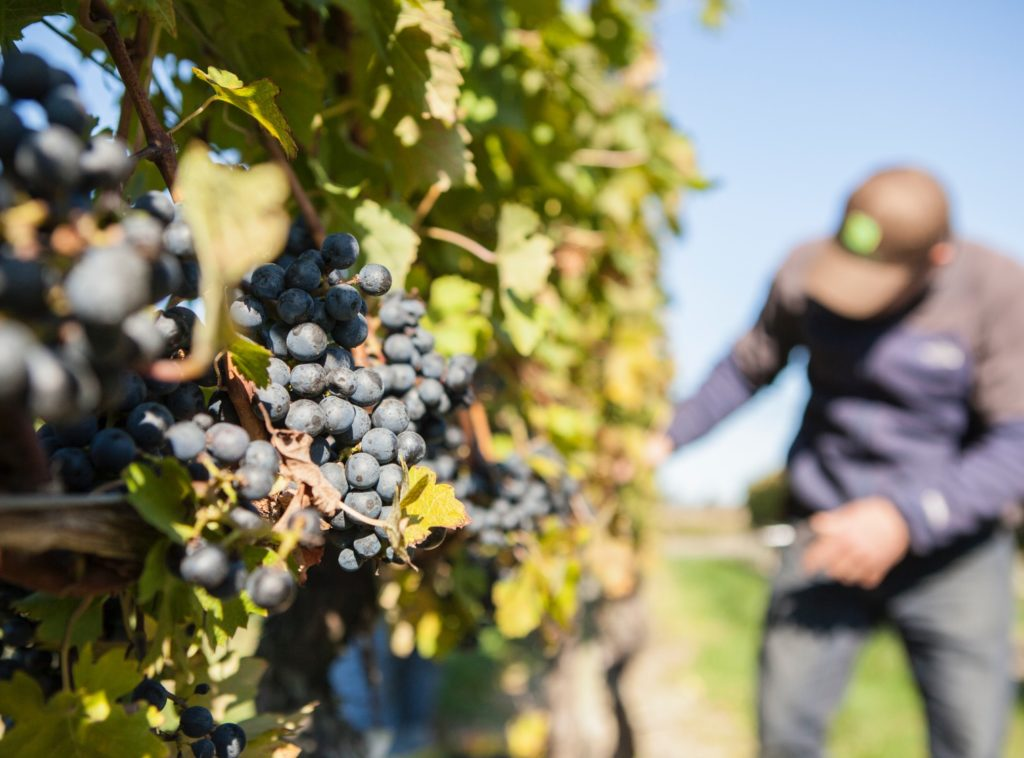 Newport Vineyards History